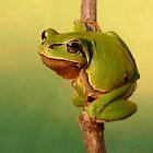 Go go Frog by Istvan froghunter