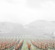 Misty Vineyard by yorgi