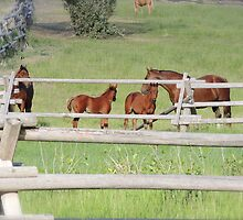 Yearlings by Rachel Meyer