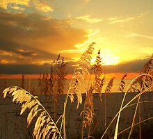 Golden Sea Oats by Carla Barone