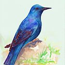Blue Rock Thrush by anatolia