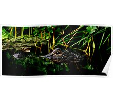 Alligator Portrait #3. Three Lakes W.M.A. Poster