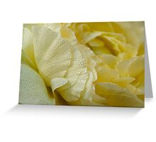 Dewy petals greet the morning sun Greeting Card