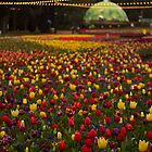 Canberra Floriade by Michelle Lia
