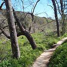 pathway by marilittlebird