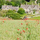 Cotswold Poppy Field by Stephen Knowles