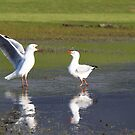 Golfing Gulls by Emma Holmes
