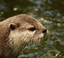 Asian Short Clawed Otter by JandD