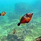 White Spotted Filefish by globeboater