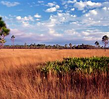 Prairie View. Three Lakes W.M.A. by chris kusik