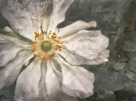 Flowerburst by olga zamora