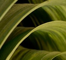 Nature abstract for your iPhone by Martyn Franklin