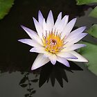 Beauty in an Unlikely Place by Maurine Huang