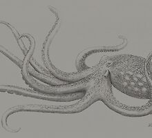 Octopus 1 by Diane Johnson-Mosley