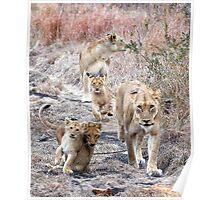 Family Walk Poster