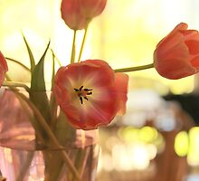 Tulip season by Jeannine de Wet