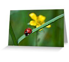 Ladybird on grass Greeting Card
