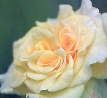 softly Rose by RosiLorz