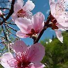 Flor de almendro by KSissy