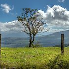 A fence and a tree, 3552HDR color by mauvarca