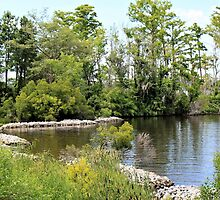 On the Banks of the Perquimans River by WeeZie