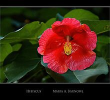 Shiny Red Petals - - Posters & More by Maria A. Barnowl