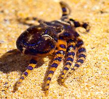 Rockpool visitor by Doug Cliff