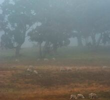 Foggy sheep by Ian Fegent