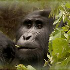 kanyonyi the gorilla by gruntpig