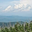 Our Vacation in the Great Smokey Mountains.  by barnsis