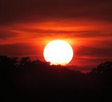 Carolina Sunset by Cynthia48