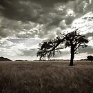 Tree Silhouette by Jill Fisher