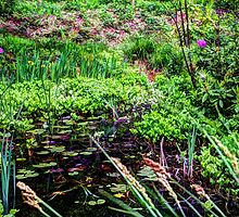 Lily pond Devon by maratshdey