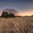 The Tree in the Field by John Davenport