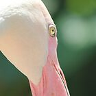 Blushing Flamingo by KelseyGallery