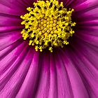 Macro Flower - Up Close and Personal by Harmeet Gabha