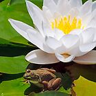White Water Lily with Frog by Kenneth Keifer