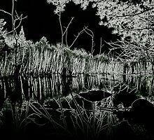 Winter's Night by Phil Vriend