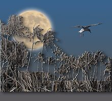 2324 by peter holme III