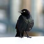 Bodega Bay Birdie by Kirstyshots
