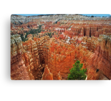 The Hoodoos of Bryce Canyon Canvas Print