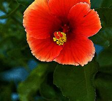 Vermillion Hibiscus - - Cards & iPad Cases by Maria A. Barnowl