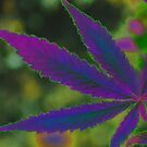 Marijuana Leaf Purple Abstract by FloraDiabla