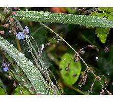 Nature's Sparkle Photographic Print