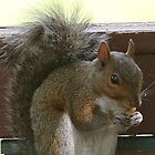 Squirrel Eating a Walnut by Terry  Berman
