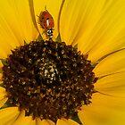 Ladybug by Don Marshall