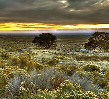 High Plains Sunset by Dawn Crouse