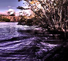 Mangroves on the River by AHakir