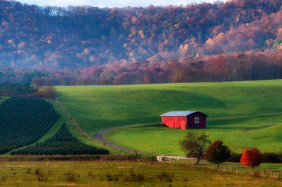 Christmas Tree Farm by Jane Best
