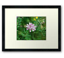 Beautiflul Crown Vetch Framed Print